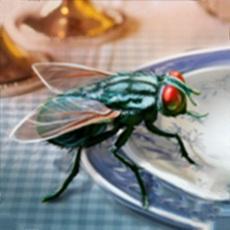 苍蝇生存模拟器